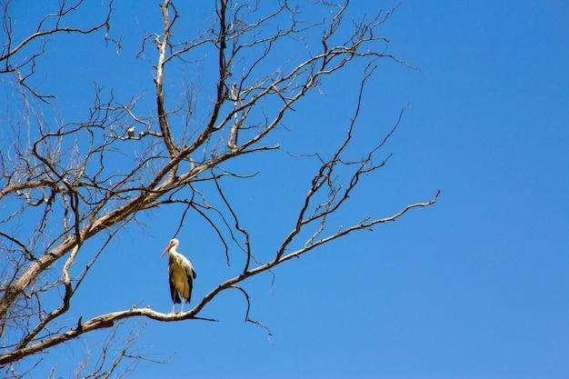 Cegonha no cimo de um galho de árvore no céu azul.