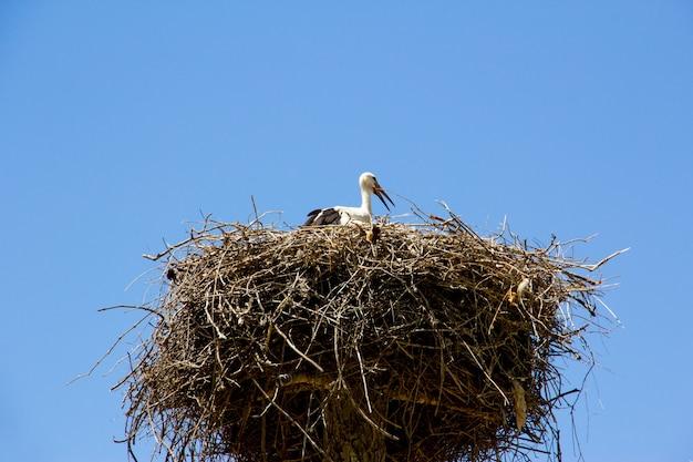 Cegonha no cimo de um ninho de palha em um céu azul.