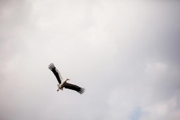 Cegonha voando no céu