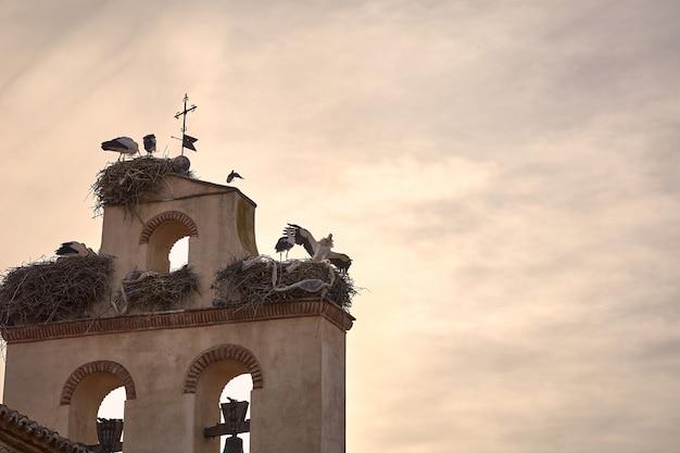 Cegonhas bonitas em um por do sol da mola no campanário de uma igreja