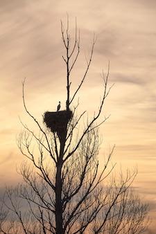 Cegonhas bonitas em um pôr do sol de primavera