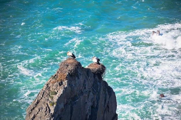 Cegonhas em um penhasco na costa oeste de portugal. tiro horizontal