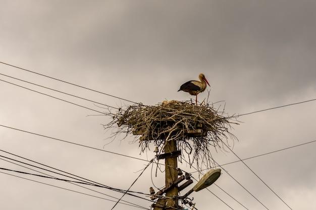 Cegonhas no ninho em um poste elétrico alto