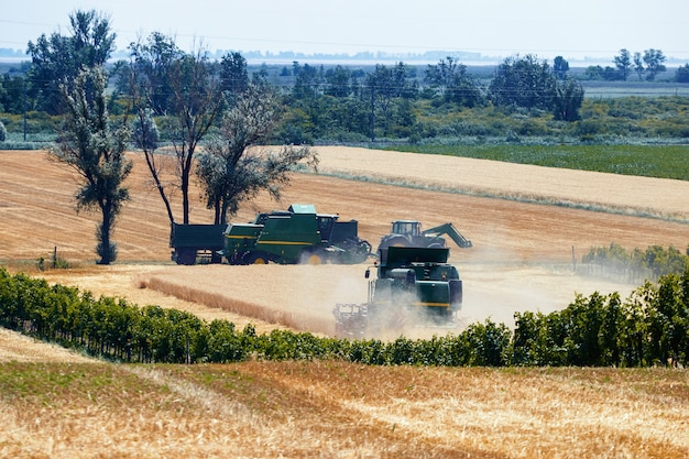 Ceifeiras-debulhadoras trabalhando no campo