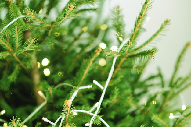 Celebração do natal. close-up de galhos de árvores verdes do abeto decorados com luzes de fadas.