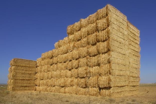 Celeiro de cereais com pilha de forma quadrada em colunas