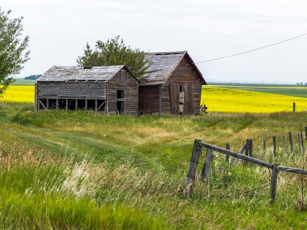 Celeiros abandonados, em, fazenda, sulista, alberta, alberta, canadá