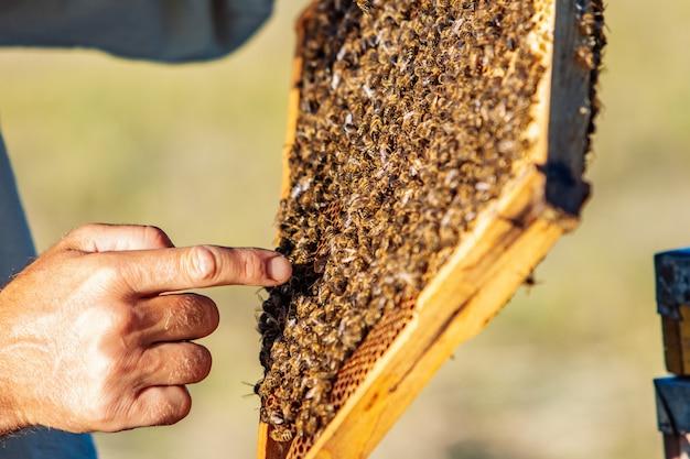 Célula de mel com abelhas closeup em um dia ensolarado. apicultura. apiário