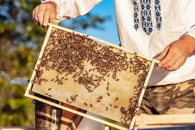 Célula de mel com close up de abelhas em um dia ensolarado.
