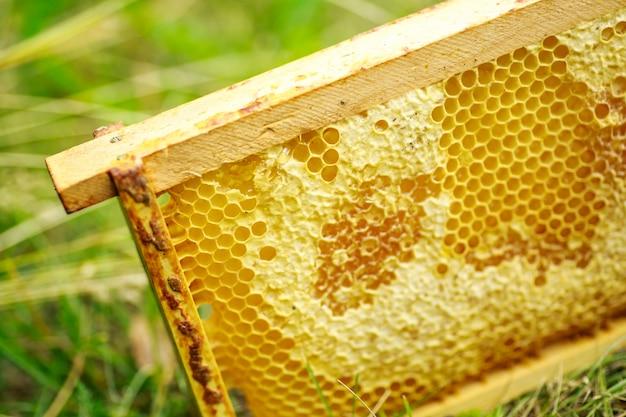 Células seladas amarelas no quadro. quadro de mel com mel maduro. moldura pequena de madeira com favos de mel cheios de mel de acácia.