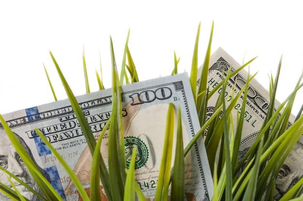 Cem notas de dólar entre a grama verde em um fundo branco.