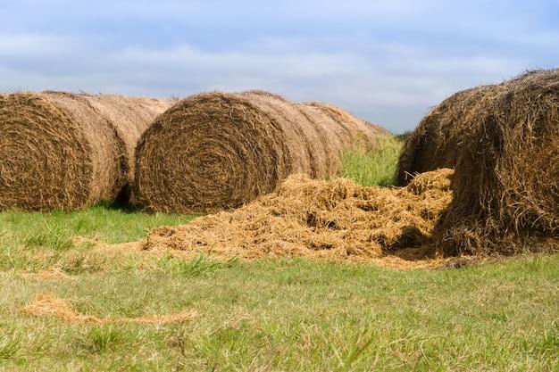 Cena agrícola com rolos de alfafa no campo argentino