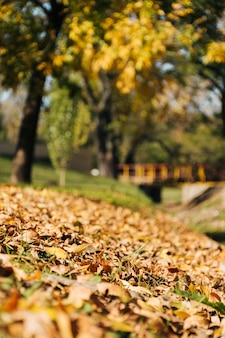 Cena bonita do outono com fundo desfocado parque