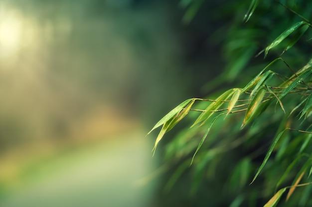 Cena borrada de galhos de árvores na floresta