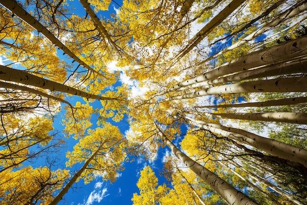 Cena colorida da floresta ensolarada na temporada de outono com árvores amarelas em dia claro.
