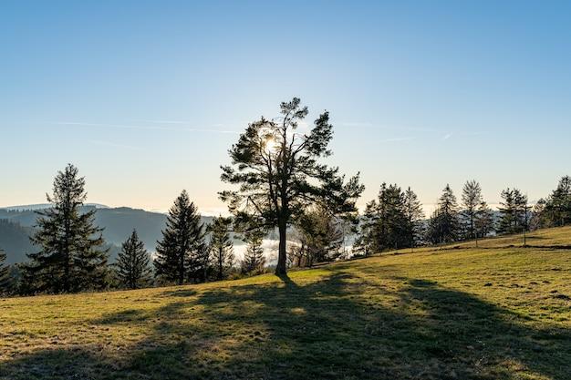 Cena da floresta com árvores e um vale com neblina dentro