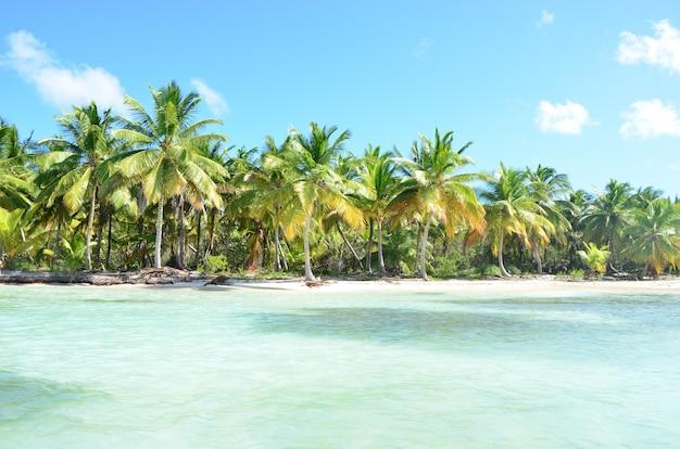 Cena da natureza do verão. praia tropical com palmeiras.