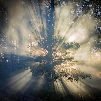 Cena de bela manhã, raios de sol rompem os galhos das árvores. fundo