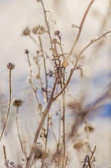 Cena de gelo natural de inverno. frozenned planta gelada