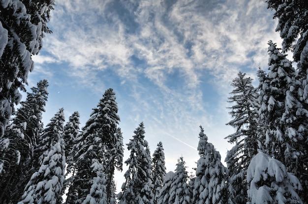 Cena de inverno, beleza natural