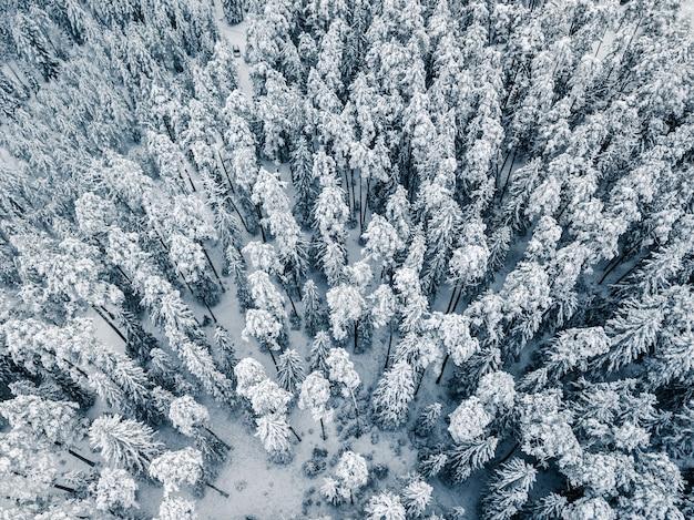 Cena de inverno da floresta coberta de neve - fundo do banner