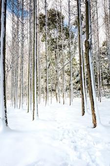 Cena de neve do parque de inverno