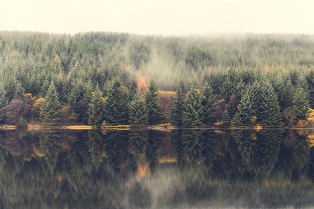 Cena de outono, névoa sobre as árvores ao lado do lago
