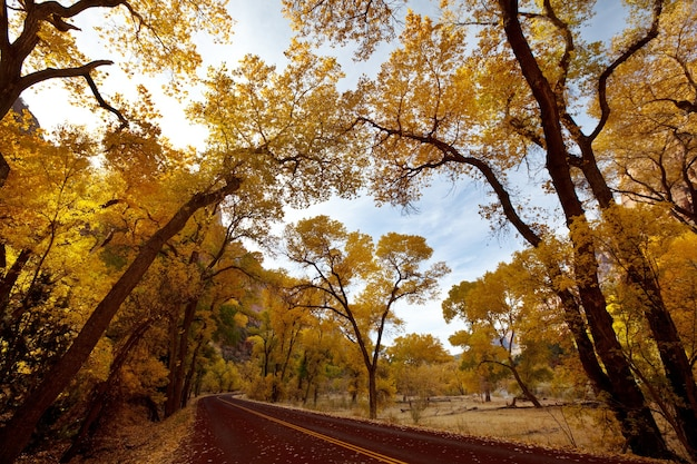 Cena de outono no parque nacional de zion, utah, eua