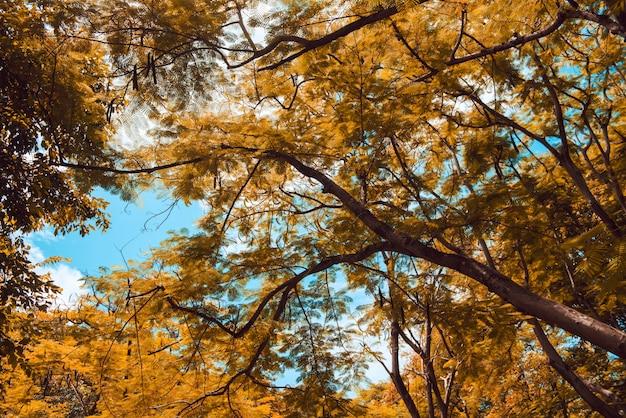 Cena dourada de outono em um parque, com folhas caindo, o sol brilhando pelas árvores e no céu azul