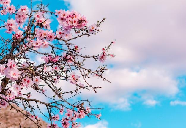 Cena linda natureza com árvore florescendo