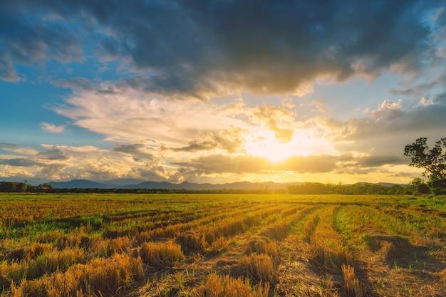 Cena natural, nuvens céu, e, campo, agrícola, pôr do sol