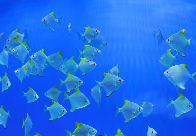 Cena subaquática, mostrando diferentes peixes coloridos nadando