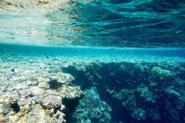 Cena subaquática tranquila com espaço de cópia