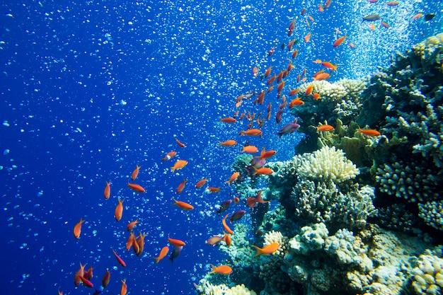 Cena subaquática tranquila