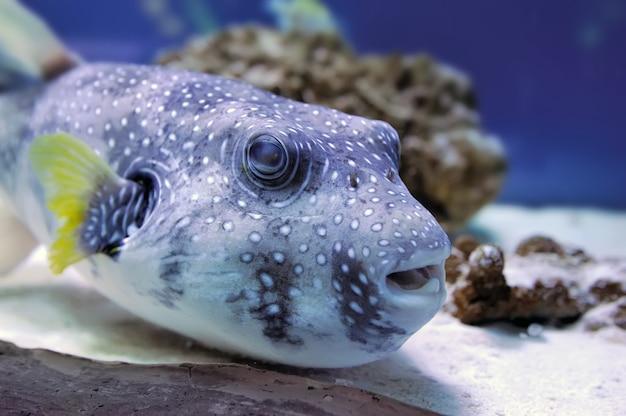 Cena subaquática