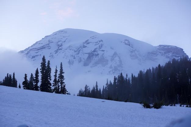 Cenário branco bonito do inverno do parque nacional de monte rainier, estado de washington