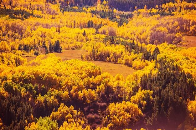 Cenário colorido da floresta queda