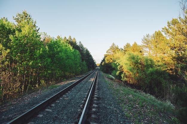 Cenário com estrada de ferro em perspectiva através da floresta.