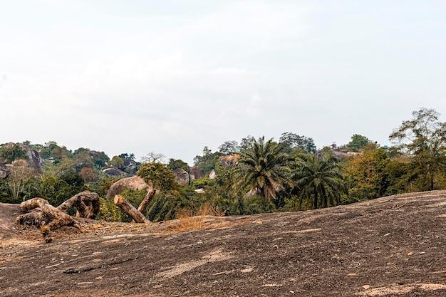 Cenário da natureza africana com árvores e vegetação