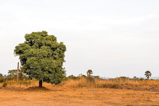 Cenário da natureza africana com céu claro e árvores
