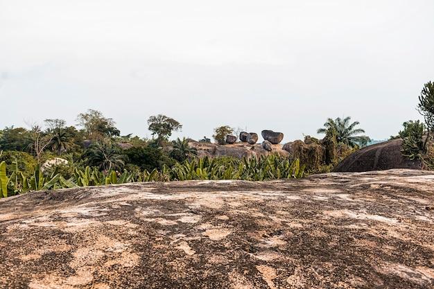 Cenário da natureza africana com vegetação e árvores