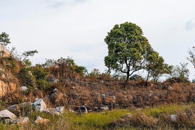 Cenário da natureza africana com vegetação