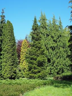 Cenário de diferentes tipos de árvores tocando o céu claro