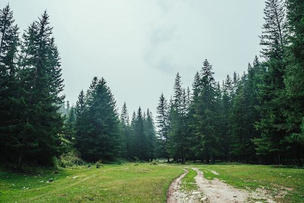 Cenário de floresta atmosférica com estrada de terra entre abetos nas montanhas.