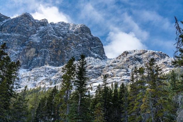 Cenário de floresta no início do inverno, pinheiros verdes em primeiro plano, montanhas cobertas de neve com árvores congeladas