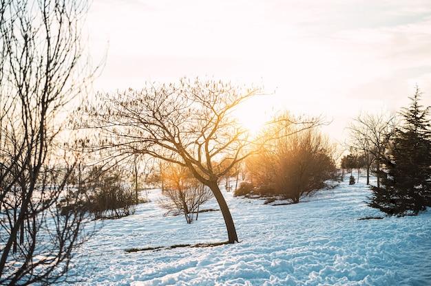 Cenário de inverno com árvores sem folhas e arbustos crescendo em um prado coberto de neve na luz do sol no campo