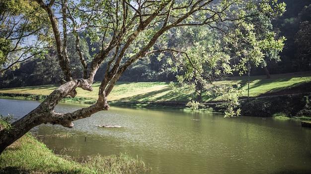 Cenário de lago natural