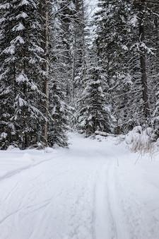 Cenário de paisagem invernal com maneira modificada de esqui cross country.