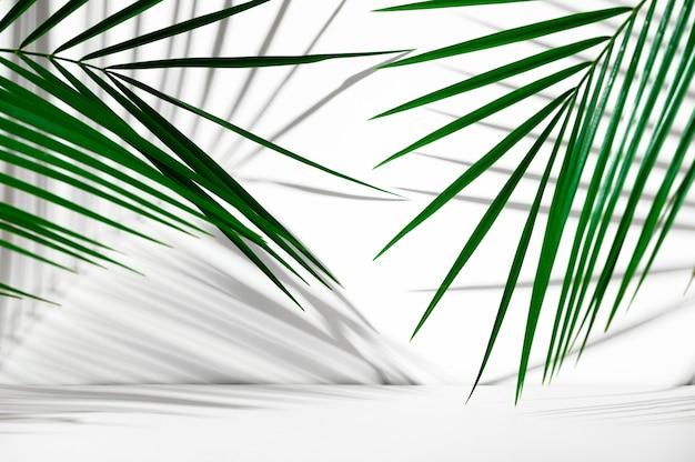 Cenário de publicidade de produtos cosméticos. exposição de pódio branco sobre um fundo branco com folhas de palmeira e sombras. pedestal vazio para exibir a embalagem do produto. showcase mockup.