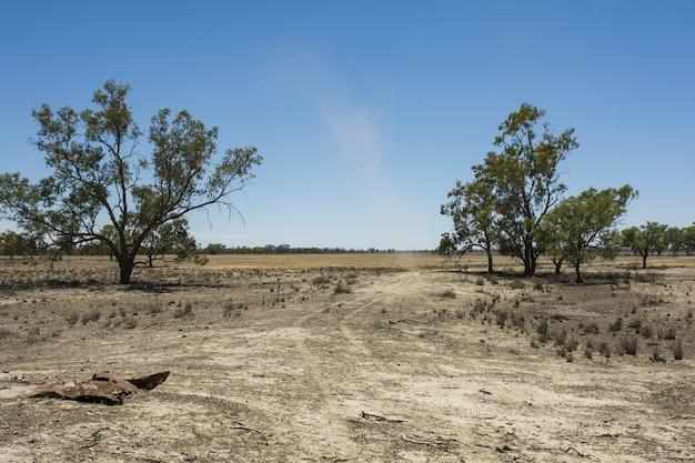 Cenário de um campo cheio de diferentes tipos de vegetação seca sob um céu claro